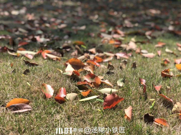秋天2.jpg
