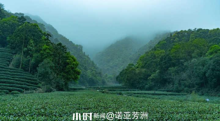 茶山.jpg