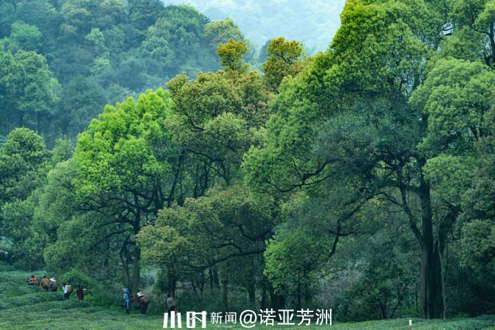茶山2.jpg