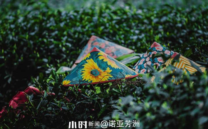 茶山3.jpg