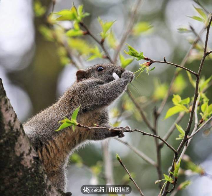 卢翔:吃花的松鼠.jpg