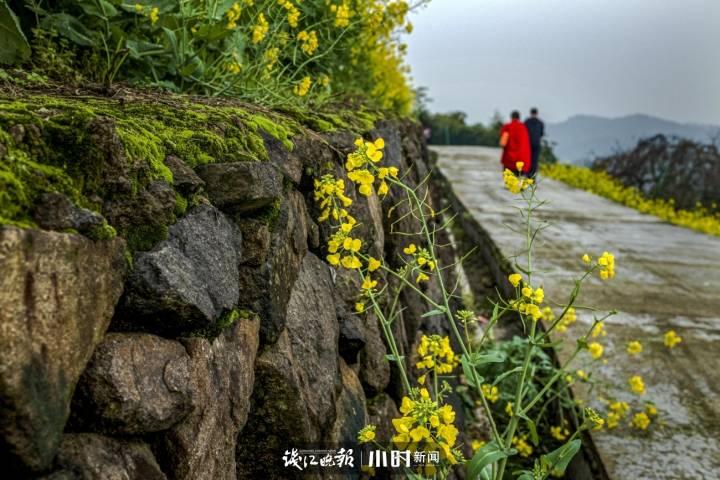 皖兰:高山上,油菜花开,一对情侣漫步在油菜中.....jpg
