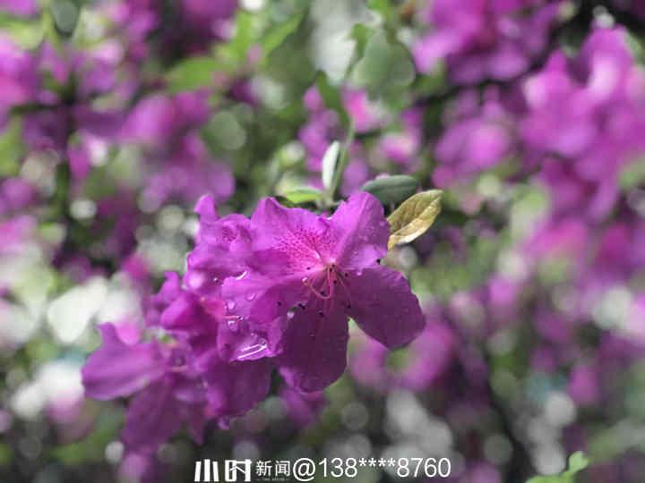 微信图片_20210414155646.jpg