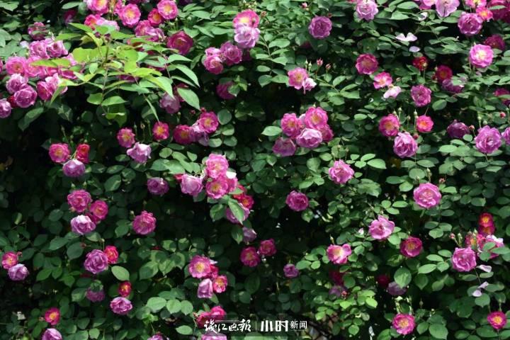 f9570885-ab9f-4385-9296-1dcecf2dd8d7.jpg