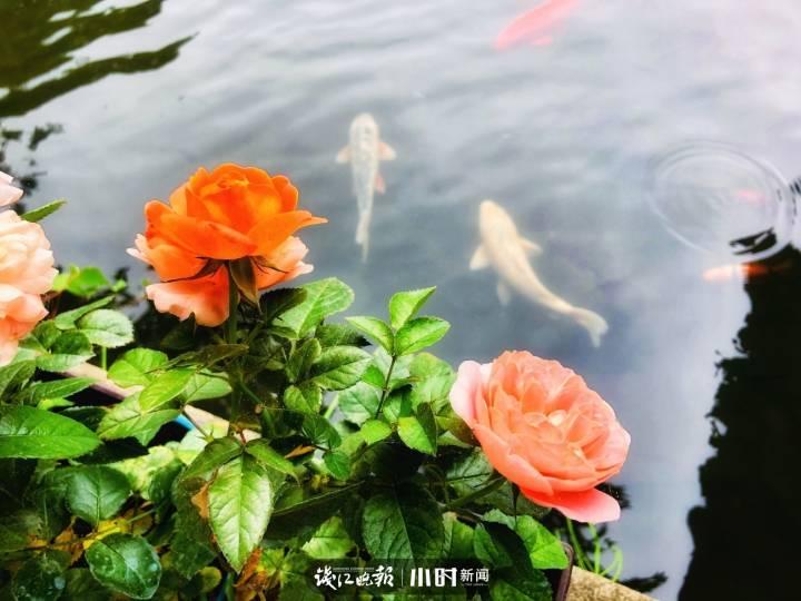 #爱拍#花儿和鱼儿 我心飞翔 摄于郭庄.jpg
