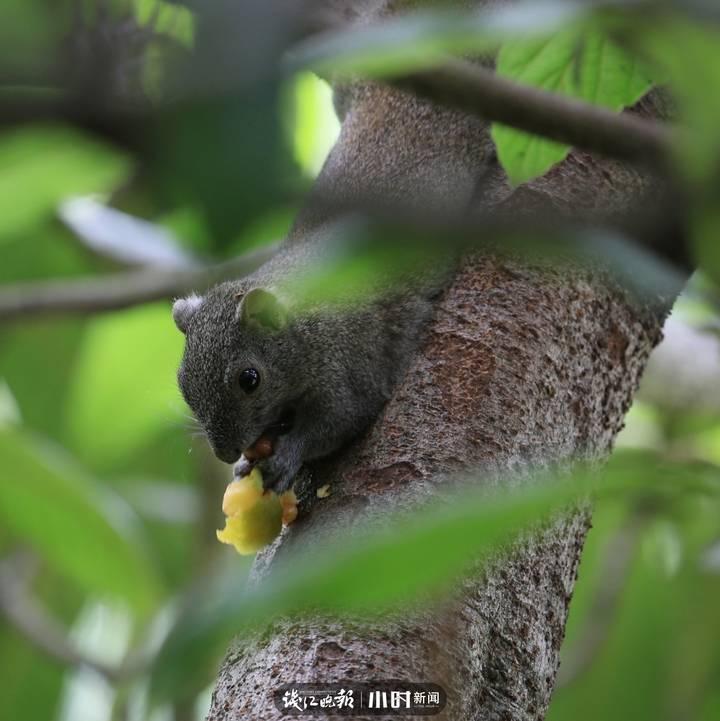 #每日一图#卢翔:枇杷味道不错嘛...哈哈,讲究……谢谢卢翔老师 分享给我们那么生动的一组照片.jpg