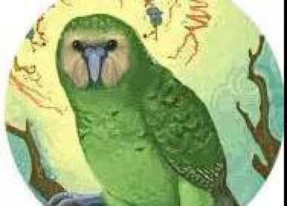鸟界的哈士奇,这么可爱居然有人忍心吃