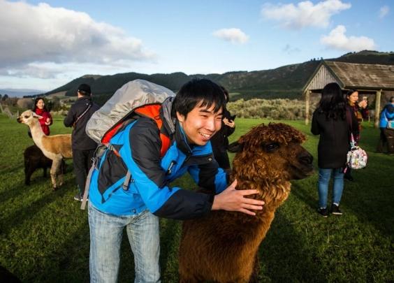 新西兰中国自由行游客增多 促旅游业飞速发展
