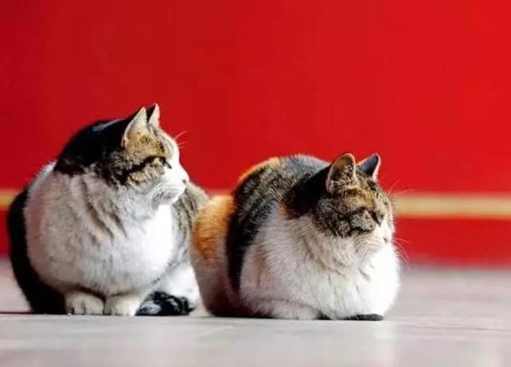 歪,妖妖灵吗,有人在故宫里聚众吸猫!