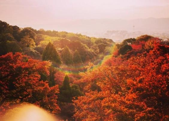 京都的红叶呀,在所有物是人非的景色里
