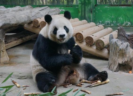 野生动物世界:吃饱饱裹成球,空调地暖开起来