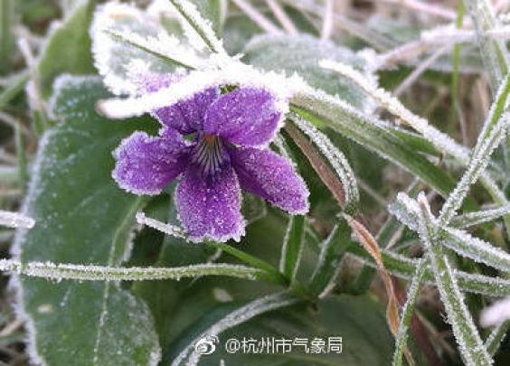 【天气】植物园结冰了?周三起湿冷日子就来了