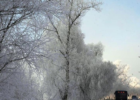 吉林现大范围雾凇,玉树琼枝如童话世界