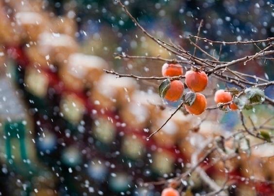 速速收藏起来!最实用的雪天拍照技能大分享