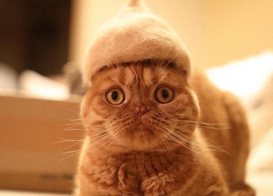 献给吸猫人士的吸毛大法——如何清理猫毛?