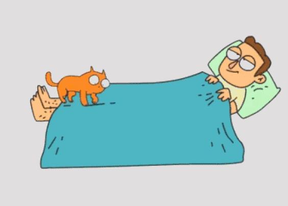 养了猫以后的日常...