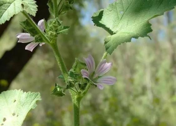 我家院儿里的小野花成精了?它居然有记忆、会学习