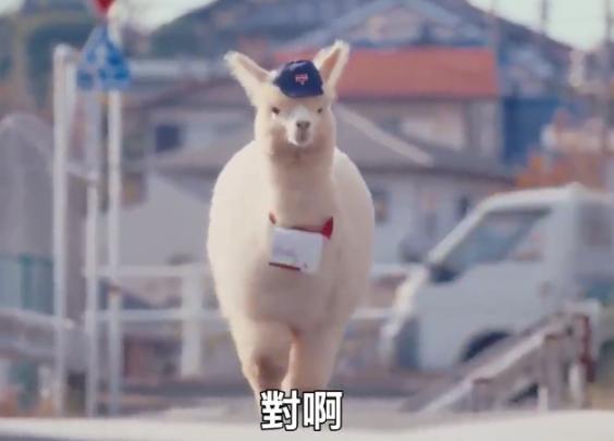 日本邮政局找来了羊驼来做广告,声称他们像它一样...