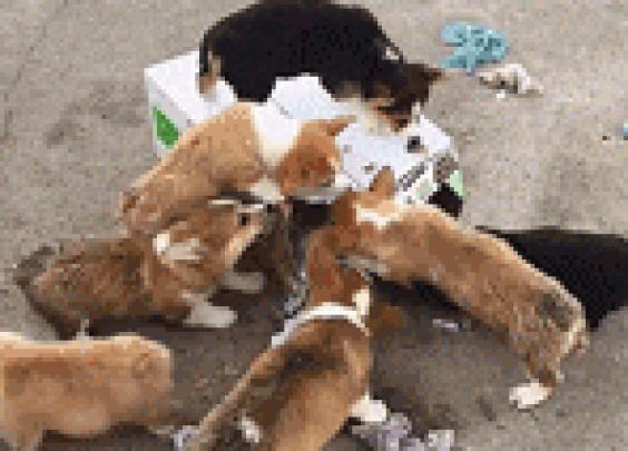 正在努力解救被困小伙伴的一群狗子。。