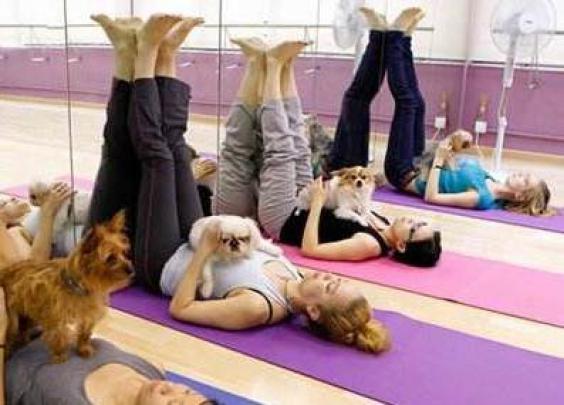 狗年健身新方式:和爱犬一起做瑜伽!