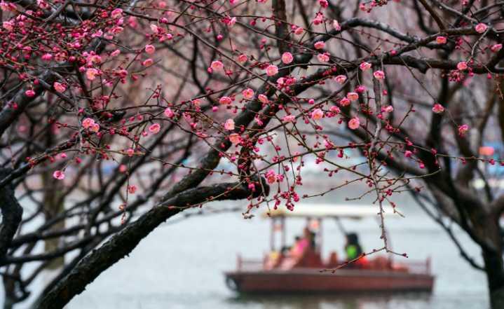 暗香疏影 赏梅时节