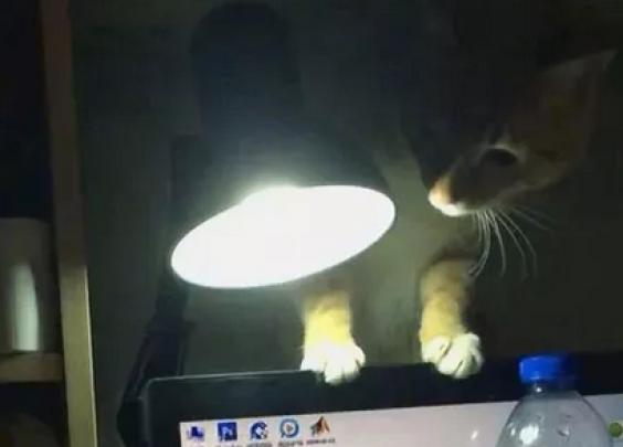 网友抓拍到自家橘猫偷吃东西的全过程...