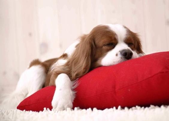 6只狗选一只,测出你狗年的爱情和运势