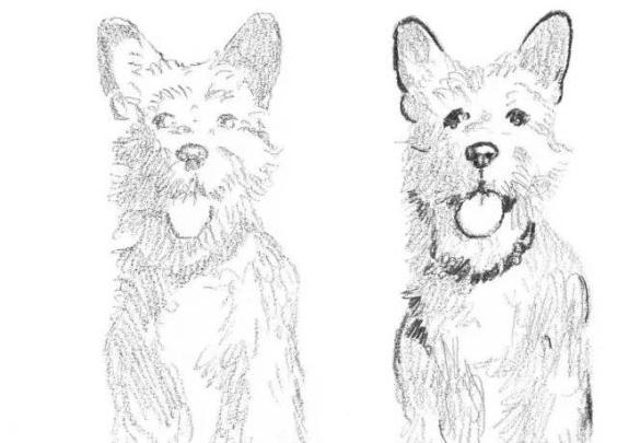 狗的绘画入门教程
