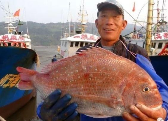 """重5.8斤的""""海鸡""""见过吗?它非鸡,是海鱼"""