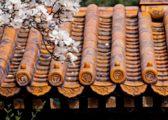 紫禁城的玉兰无论初开还是盛放,都一样清润可爱。