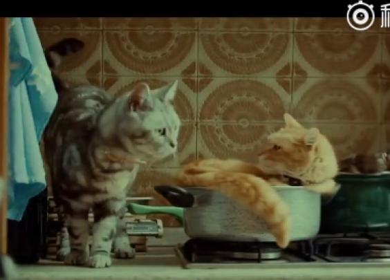 日本YKK AP猫咪系列广告合集