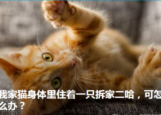 养猫的家庭如何装修才能把猫的破坏降到最低?