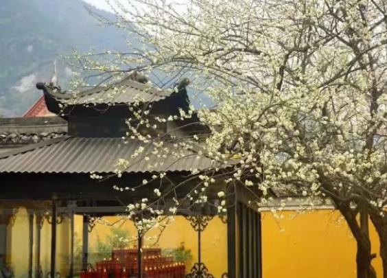清明小长假去哪儿?我愿在台州遇见满城春色