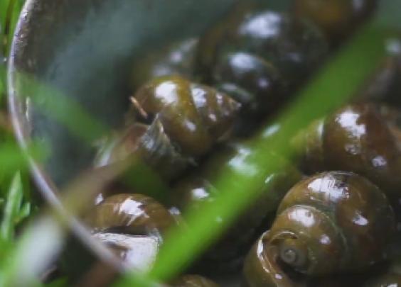 肉大多汁的巨型田螺,搭配辣椒酸笋,辣得好过瘾啊...