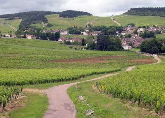 勃艮第葡萄园风土