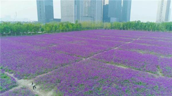 紫罗兰4.jpg
