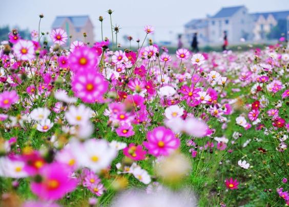 杭州旅游数据预测 五一小长假游客人均逗留时间约...