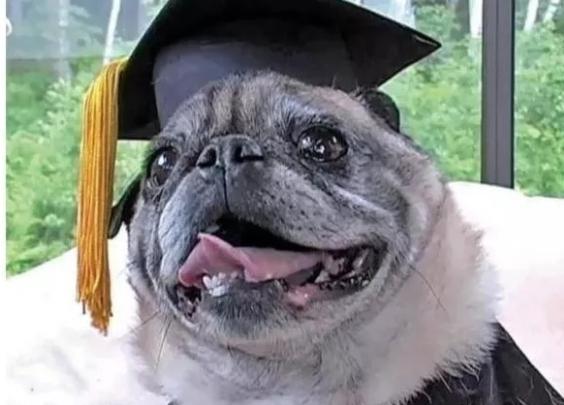 BBC暗访,假文凭横行,狗拿到了MBA学位