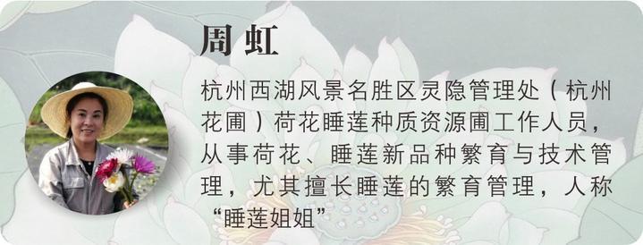 杨万里关于荷花的诗_【爱莲说·第2讲】爱写荷花诗的白居易、杨万里最喜欢什么荷花