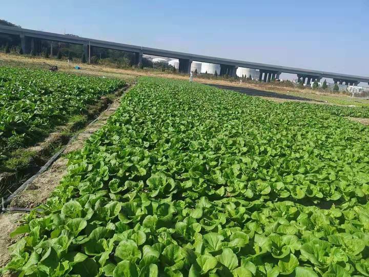 白泉蔬菜基地.jpg